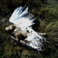 Martial Eagle killed by Eskom electric wire Mick Dalton