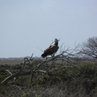 Martial Eagle seen by National Park Staff in Ratelrivier area